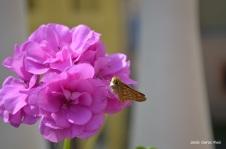 Mariposa posada en una flor